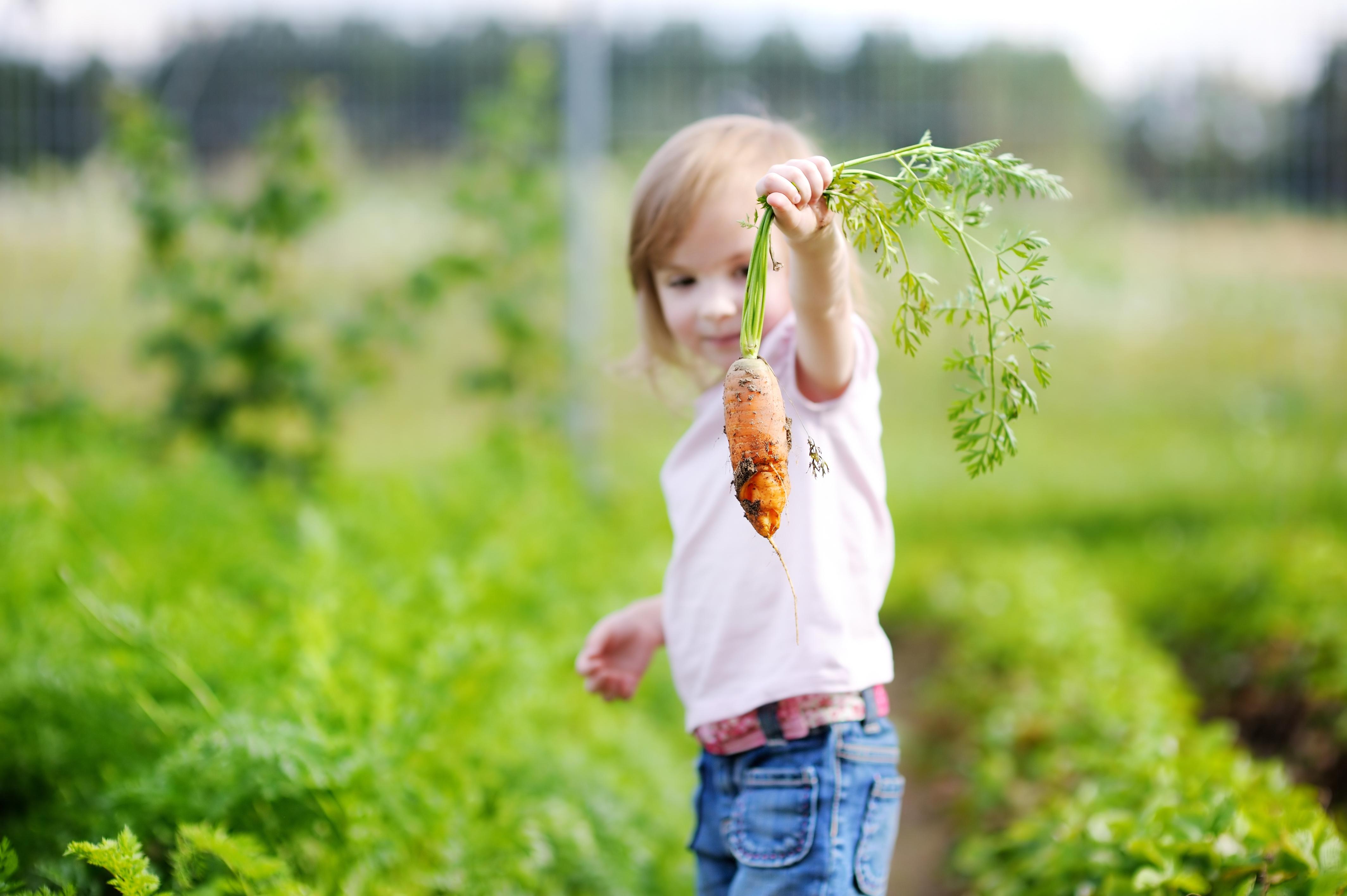 Kij i marchewka - zdrowy tryb życia